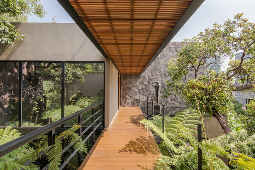 The Los Helechos House Is a Modern Oasis in Mexico Ci