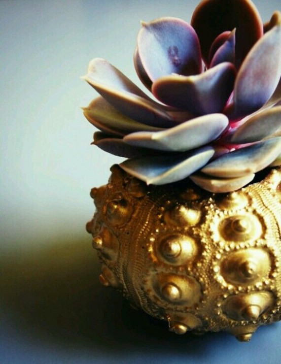 Decorating With Sea Urchins: 27 Cool Ideas - DigsDi