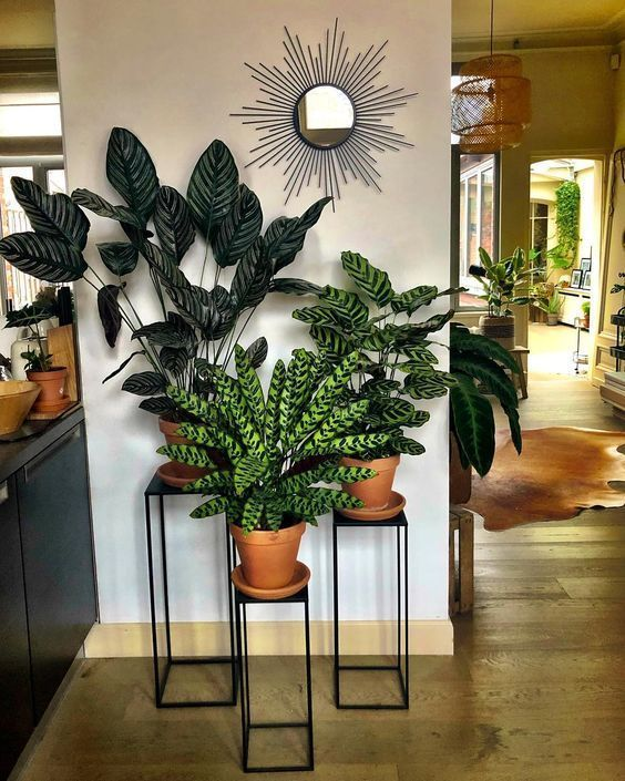 decorative stands for living room - home interior in 2020   Plant .