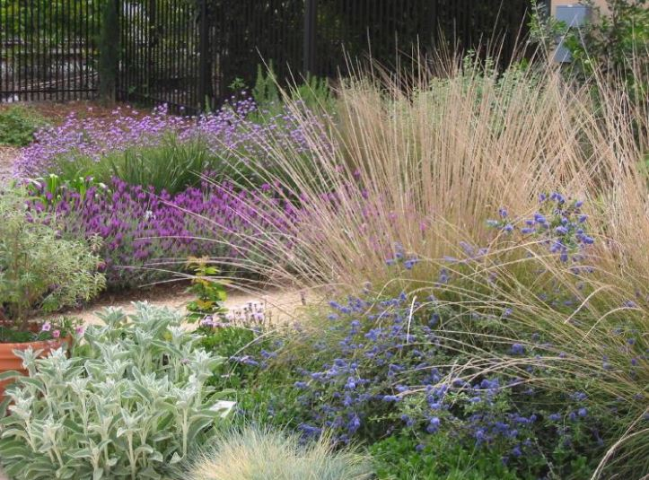 Low Water Use Landscaping | California Center for Urban Horticultu