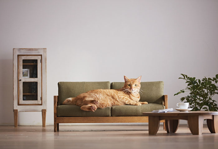 Miniature Cat Furniture From Japan To Please Your Master   Bored Pan