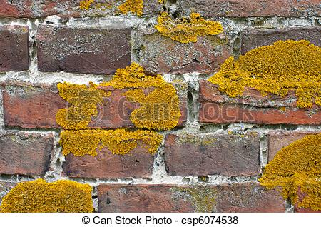 Lichen on brick wall. Old red brick wall covered with liche