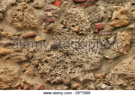 Very old brick wall covering lichen Stock Photo - Ala